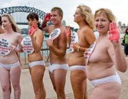 Члены организации PETA протестуют против корриды и забега быков (фото)