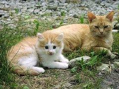 Кошки спасают от сердечного приступа