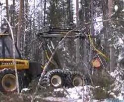 Сибирский цирюльник - современный лесной комбайн (видео)