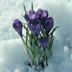 Февраль стал самым солнечным месяцем
