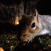 Белки-обманщики показали свои фокусы в дикой природе