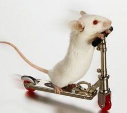 Ученые раскрыли секрет крыс, обнаружив у них навигатор