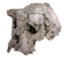 Ученые определили возраст останков древнейшего предка человека