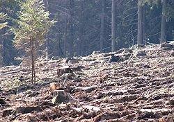 В Подмосковье вырубают лес: водоснабжение столицы под угрозой