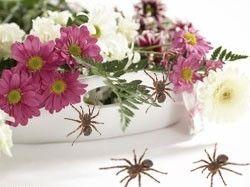 Британская фирма приготовила ко Дню матери цветы с пауками