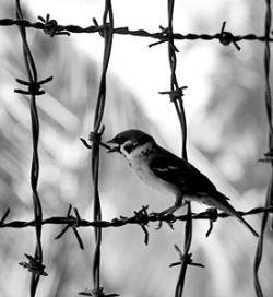 Минюст России издал новый указ, призванный сократить количество побегов из тюрем