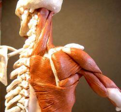 10 удивительных, но малоизвестных, фактов о человеческом теле