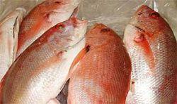 В США продается рыба с аспирином