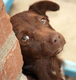 Для домашних животных создана специальная вода
