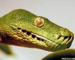 Страх перед змеями – результат эволюции