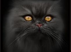 Новым президентом РФ стал кот Бегемот