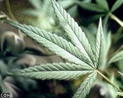 На Ямайке хотят легализовать марихуану