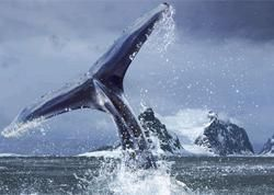 Экологи атаковали японское китобойное судно