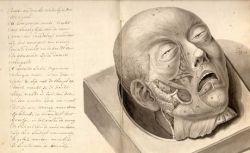 Урок анатомии из средневековья (фото)