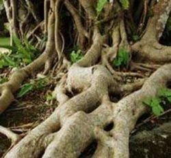 Корни ориентируются в почве с помощью белка