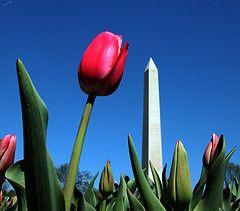 В Киргизии узаконят день «тюльпановой революции»