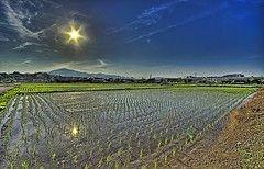 Цены на рис выросли до 20-летнего максимума