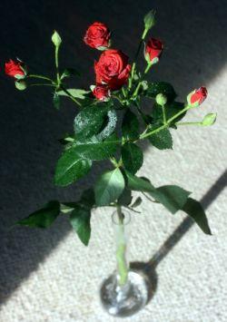 8 марта: какого подарка ждут женщины?