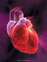 Британские ученые установили взаимосвязь между радиацией и сердечными болезнями