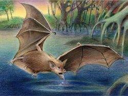 Ученые нашли в Египте ранее неизвестную гигантскую летучую мышь