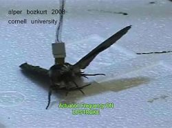 Пентагон показал насекомых-разведчиков