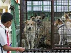 В столице Кашмира отравят 100 тысяч бродячих собак