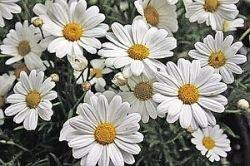 Какие цветы преподнести любимой, коллеге, маме и просто хорошей знакомой к 8 Марта