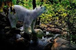 Животные в необычных местах (фото)