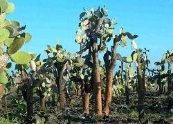 Бактерии превратят растения в спирт