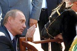 Российские миллионеры полюбили карликовых лошадок