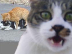 Мартовский кот и мужчина: найди 10 отличий