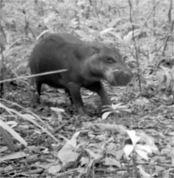 Биологи все чаще заново открывают животных, которые считались вымершими