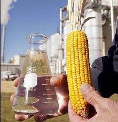 Превращение продовольствия в биотопливо увеличивает число голодающих