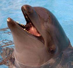 Наблюдение ученого: дельфин уговорил китов вернуться с берега в океан