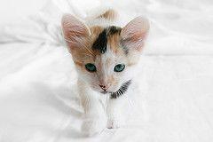 Суд приговорил жителя Берлина к тюремному сроку за убийство кота