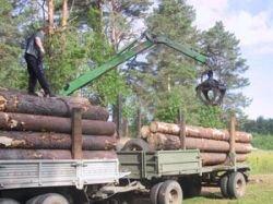 Ежегодно российская экономика теряет 8 млрд долларов только потому, что мы так и не научились перерабатывать свой лес