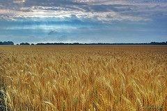 Инвестбанки начали скупать сельхозугодья