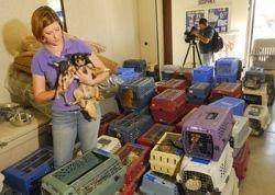 Спасатели вывезли из дома пенсионеров 800 собак