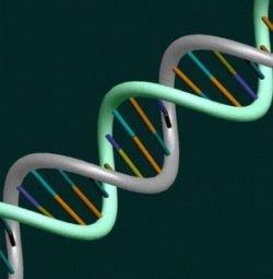 Расшифрована электронная структура ДНК