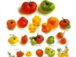 Ученые узнали секрет разнообразия помидоров