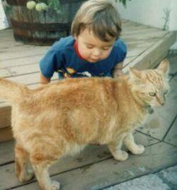 Госпитальную инфекцию разносят кошки