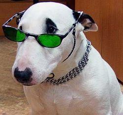Ученого пса уволили из театра за талант