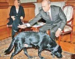 Кот Дмитрия Медведева заменит собаку Владимира Путина