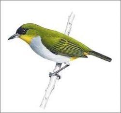 В Индонезии открыт новый вид птиц