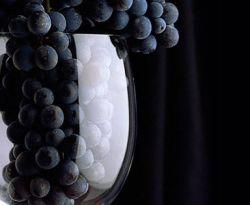 Красное вино предотвращает развитие глухоты