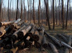 Делом о вырубке леса в Лосином Острове займется Генпрокуратура