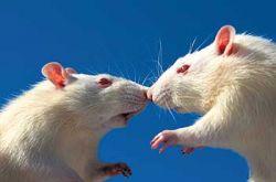 На стражу Кремля поставят белых мышей