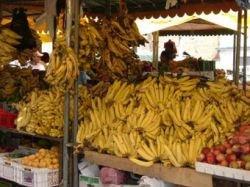 В эквадорских бананах нашли кокаин