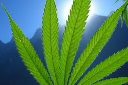 В Эстонии предложили легализовать марихуану