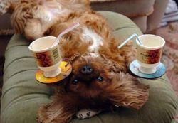 Собака, которая в прошлой жизни была официантом (фото)